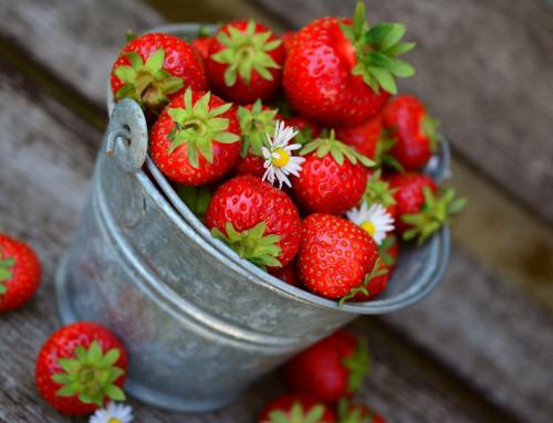¡Ya es temporada de fresas!